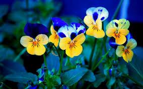 wallpaper nature with hd flower full pics mobile full