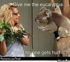 Koala Meme - koala memes best collection of funny koala pictures