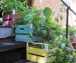 gem se pflanzen balkon balkon erdbeeren pflanzen kräuter salat upcycling weinkisten