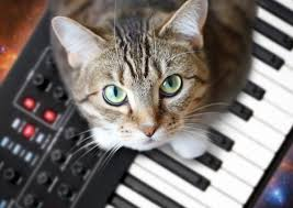 Cat Playing Piano Meme - cats on synthesizers in space
