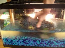 How To Clean Fish Tank Decorations Dirty Tank Let U0027s Clean It Up 10 Steps