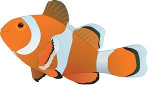 marine fish clipart nemo fish pencil color marine fish