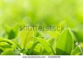 Green Plants Closeup Nature View Green Leaf Garden Stock Photo 538684501