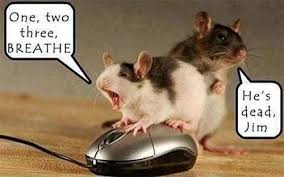 Mouse Memes - 25 most funniest mouse meme pictures and images of all the time
