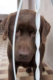 Tierheim Bad Segeberg Labrador In Not Labradorseite De