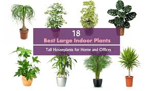 indoor plans best indoor plants balcony garden web