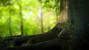 Emotional Green Tree Wallpaper Download Free Desktop Graphics