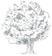pictures draw a tree with leaves drawing art gallery