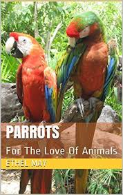 parrots in paradise kealakekua hawaii exotic bird 18 best for the love of animals images on pinterest adorable