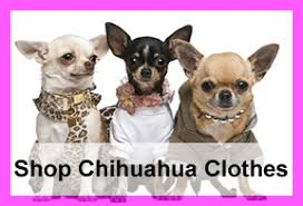 chihuahua sweaters chihuahua clothes and accessories at the chihuahua wardrobe