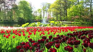 Largest Flower In The World Flowers In The Park Keukenhof The World U0027s Largest Flower Garden