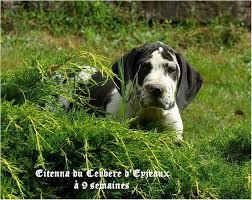 charni鑽e placard cuisine 騁ag鑽e coulissante cuisine 100 images 騁ag鑽e bois brut 28 57
