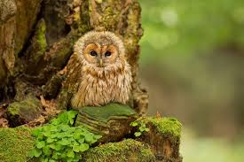 Barn Owl Photography 30 Amazing Owl Pictures