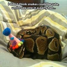 33 best gavin s clown birthday images on clowns circus animal pictures of snake with clown hat