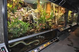 biotope reptile terrarium zoochat
