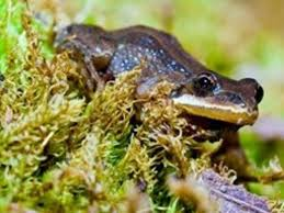 New Jersey Wildlife images New jersey dep these 107 wildlife species are facing big threats jpg