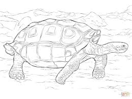 realistic galapagos tortoise download coloring pages animal