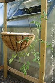 upside down tomato planters