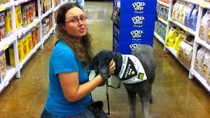psychiatric service dog grounding youtube