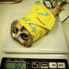 Art School Owl Meme - the 100 greatest owl pictures you ll ever see