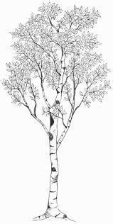 black and white birch tree design