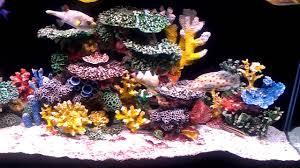 instant reef 90 gallon saltwater aquarium