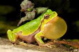 biomimicry of frogs a study of nature u0027s best ideas
