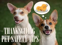 thanksgiving pet safety tips 2017 humane society of ventura county