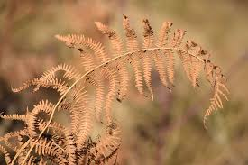 Free Picture Leaf Nature Fern Free Photo Fern Leaves Nature Stem Plant Free Image On