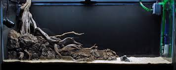 forest by the spring 55g aquascaping world forum