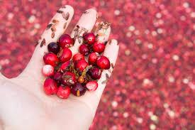 the cranberry harvest u2014 nourished kitchen