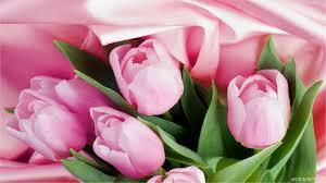 wallpaper bunga tulip eleletsitz tulip putih wallpaper images