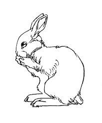rabbit tattoos tattoo design and ideas