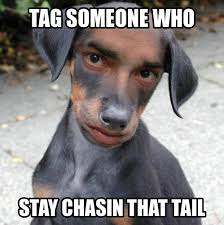 Tag Someone Who Memes - tag someone tail chaser memes random pinterest dankest memes