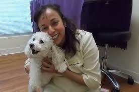 queen s dogs queen u0027s park pet hospital veterinarian in new westminster bc