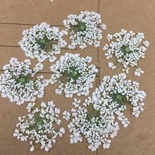 pressed flowers minoan lace flowers pressed flower gifts true plant