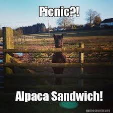 alpaca meme funny pinterest alpacas meme and funny memes