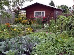 berlin garten kaufen kleingarten wie einen bekommt und was dort pflicht ist