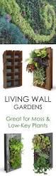 Diy Vertical Wall Garden Living Fern Moss Wall Art 2 Living Wall Planter Diy Remarkable