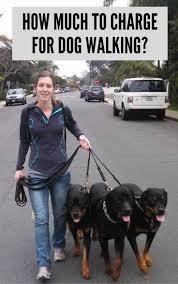 best 25 dog walking services ideas on pinterest puppy care dog
