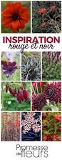 fleurs vivaces rustiques les 20 meilleures idées de la catégorie fleurs rouges sur