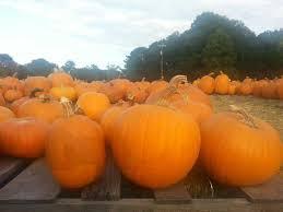 halloween pumpkins in georgia