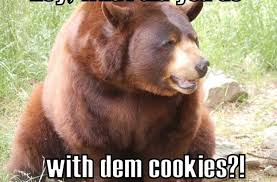 Meme Bear - bear meme