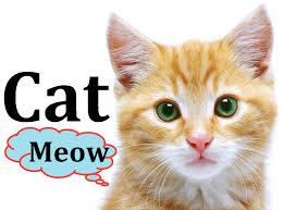 cat animals for children kids videos kindergarten preschool