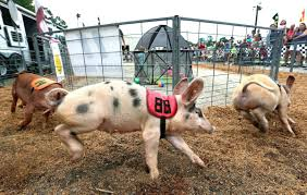 Chesterfield Pumpkin Patch 2015 by Chesterfield County Fair Returns Aug 26 Entertainment