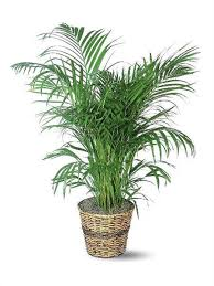 the easiest indoor house plants that won u0027t die on you today com