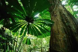 sound waves give tropical trees a checkup seeker