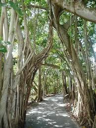 Botanical Gardens Sarasota Fl Bob S Photo Album