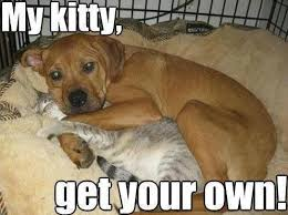 Cat And Dog Memes - funny dog memes for dog lovers dog and kitten funny hilarious