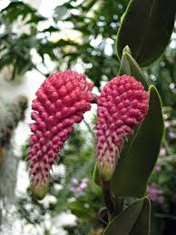 missouri botanical garden build global plant